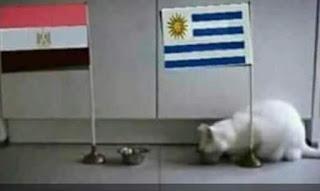 القط الروسي أخيل يتوقع نتيجة مباراة مصر واروجواى كأس العالم 2018