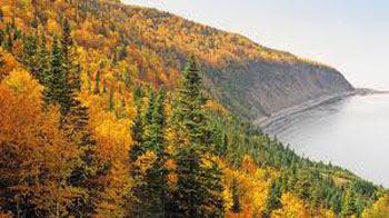 Gambar Hutan Terindah di Dunia 5
