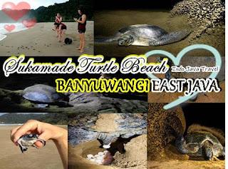 http://www.indojavatravel.com/2018/08/sukamade-turtle-beach-banyuwangi-east.html