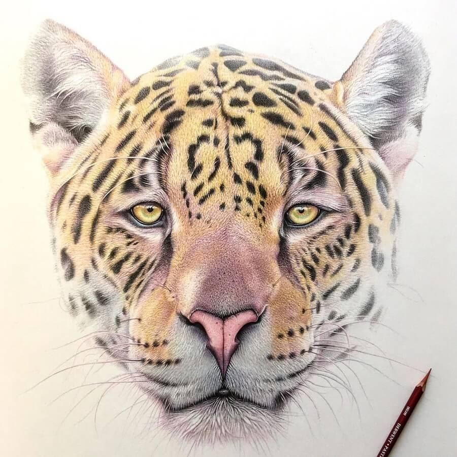 07-Leopard-Martin-Aveling-Animal-Portraits-www-designstack-co