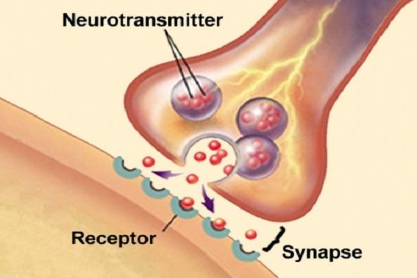 Macam – macam Neurotransmitter Otak dan Fungsinya
