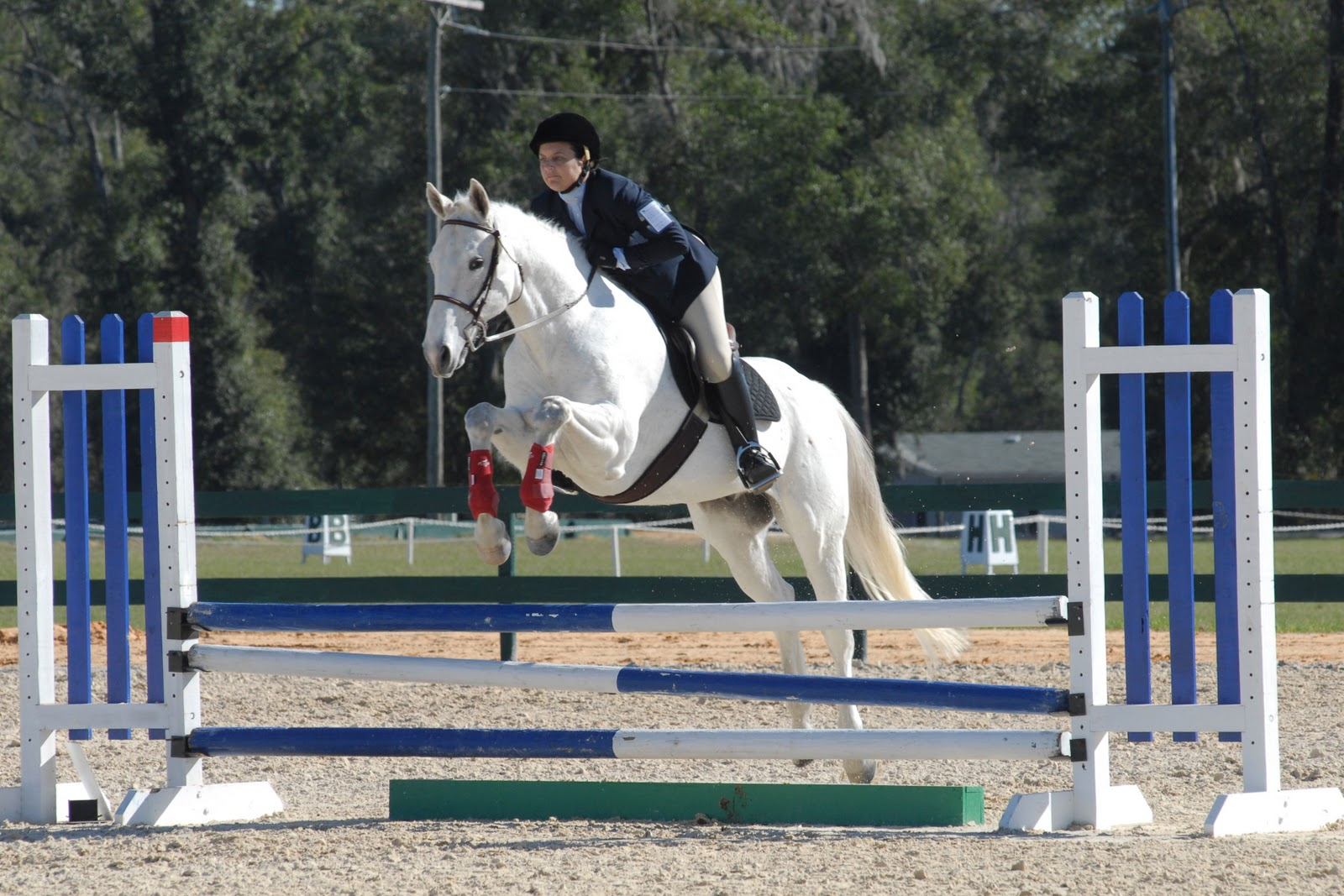 HD Animals Wallpapers: Horse Jumping Pictures