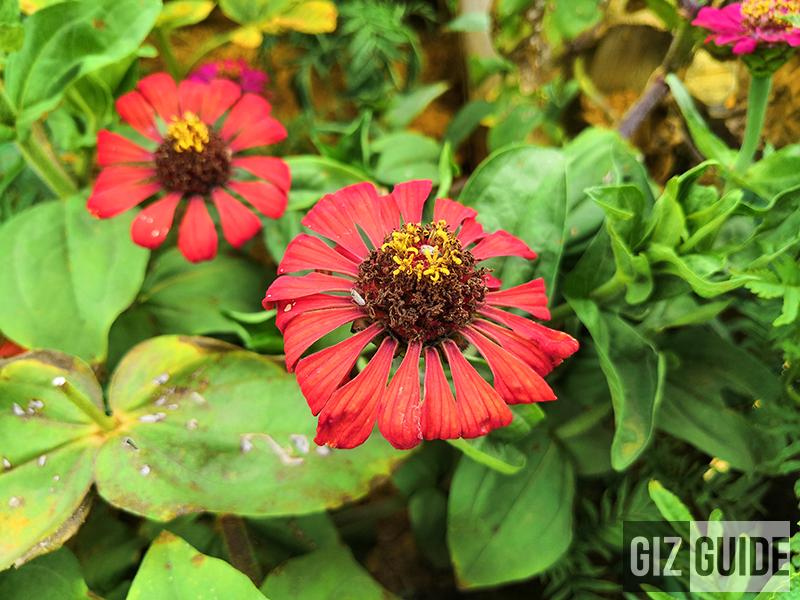AI flower