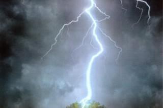 Jika Hujan Petir Hindari Berlindung di Bawah Pohon