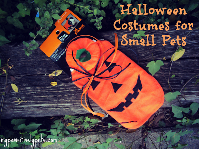 Halloween costume ideas for small pets