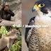 15 ที่สุดของสัตว์โลก ในแต่ละด้าน ที่คุณไม่เคยรู้
