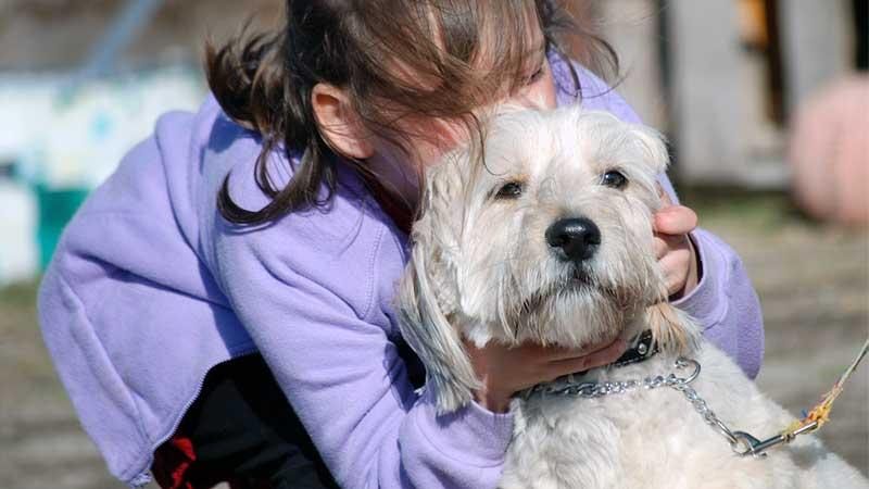 memeluk anjing