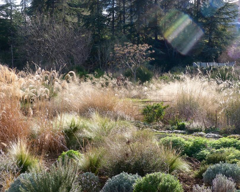 Jardines naturalistas en clima mediterr neo le jardin for Gramineas ornamentales vivero