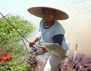 Essen Untuk Ikan Nila Khusus Di Alam Liar