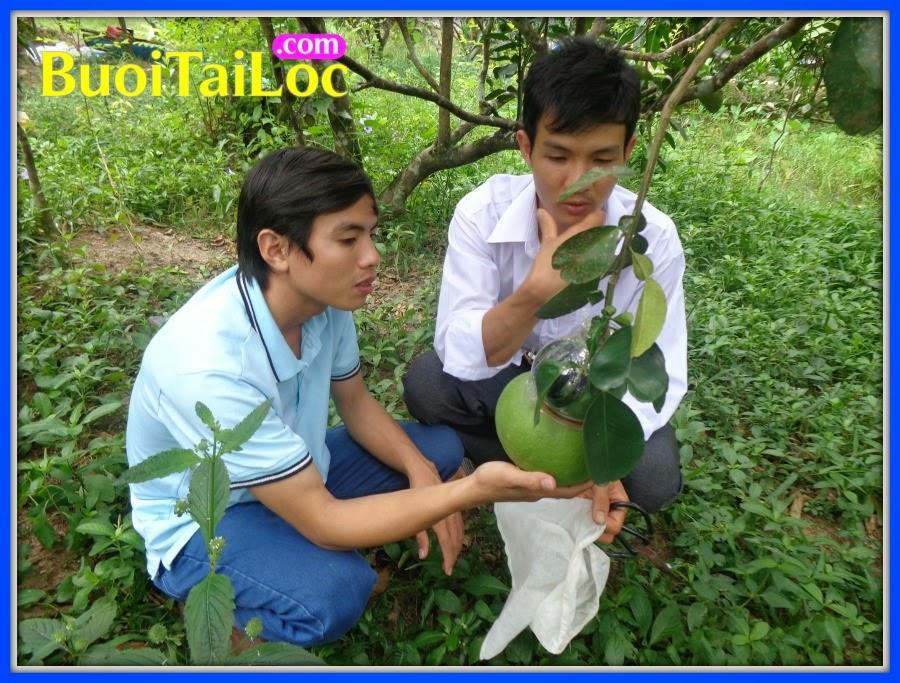 tham-vuon-trong-buoi-ho-lo-tai-loc-tet-2015