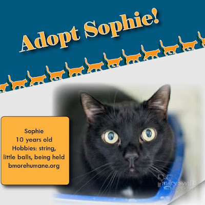 Wide-eyed black cat under an adoption banner