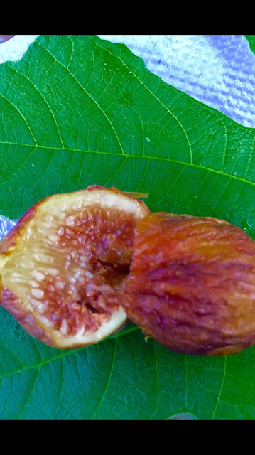 FIGUE FLUER Figs