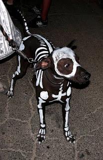 Perro esqueleto.