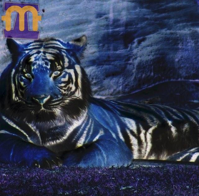 3d Home Wallpaper For Pc Imagens Mexidas Tigre Azul