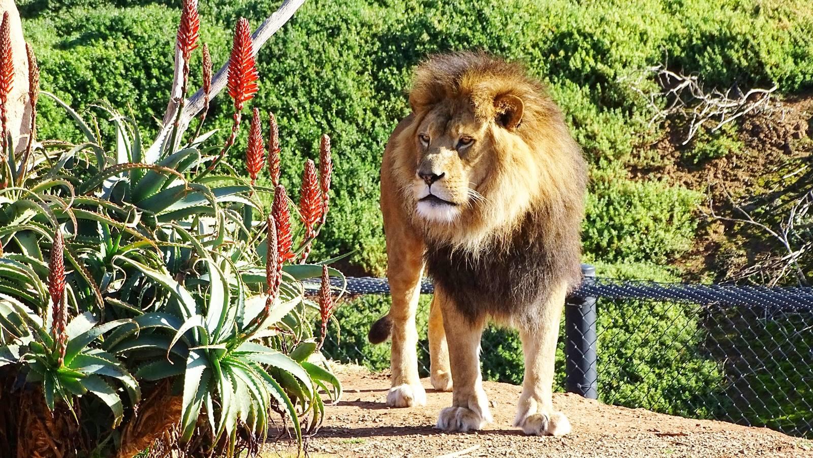 墨爾本-郊區-推薦-景點-威勒比野生動物園-Werribee Open Range Zoo-墨爾本必玩景點-墨爾本必遊景點-墨爾本必去景點-行程-自由行-墨爾本旅遊景點-墨爾本觀光景點-墨爾本好玩景點Melbourne-Travel-Attractions