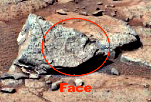 mars rover finds animal - photo #27