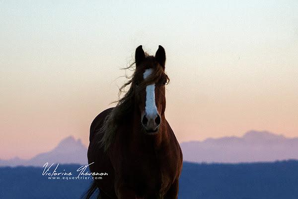 rétrospective 2017 succès photographe équestre pau chevaux