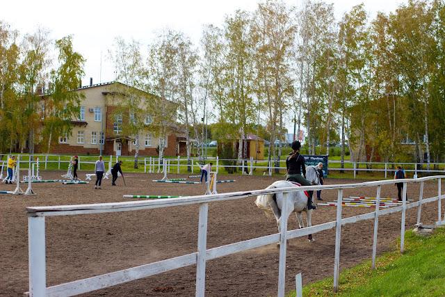 парк, лошади, омск