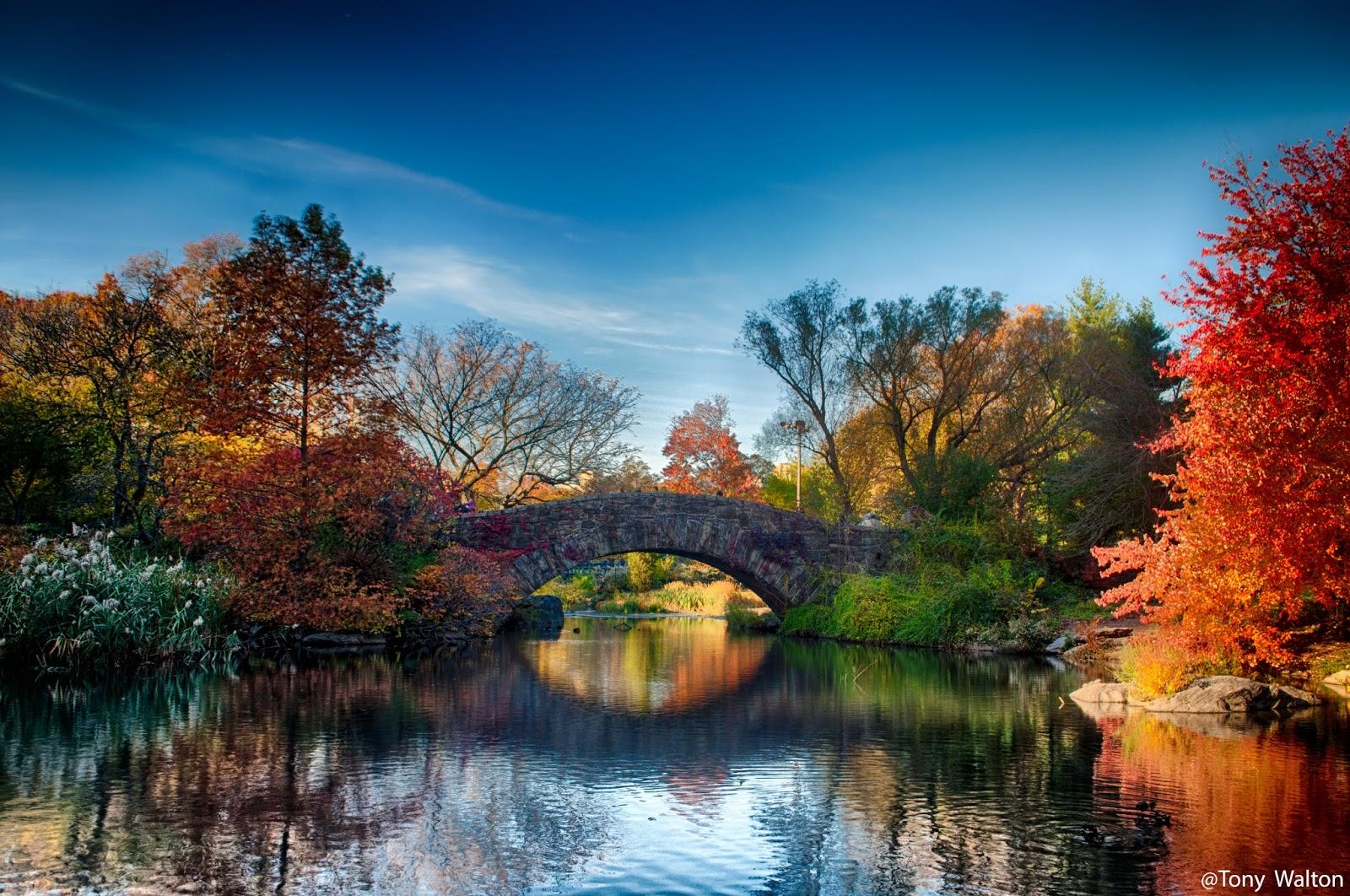 Fall Wallpaper For Windows Tony Walton New York City Gapstow Bridge Central Park