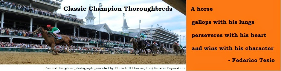 Classic Champion Thoroughbreds