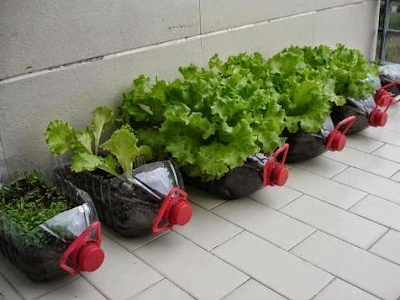 Kebun. kebun mini. menanam. tanaman