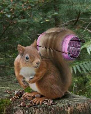 Eichhörnchen lustige Bilder Tiere Photoshop