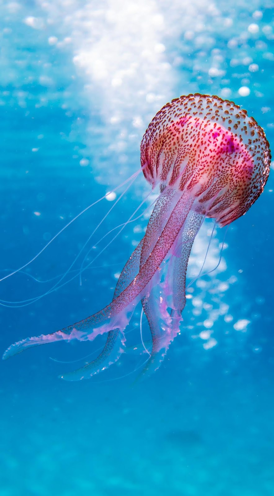 Picture of a beautiful jellyfish.