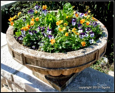 Autumn pansy urn