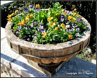 Colorful Pansy Urn