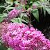 Vlinder op roze bloem achtergrond