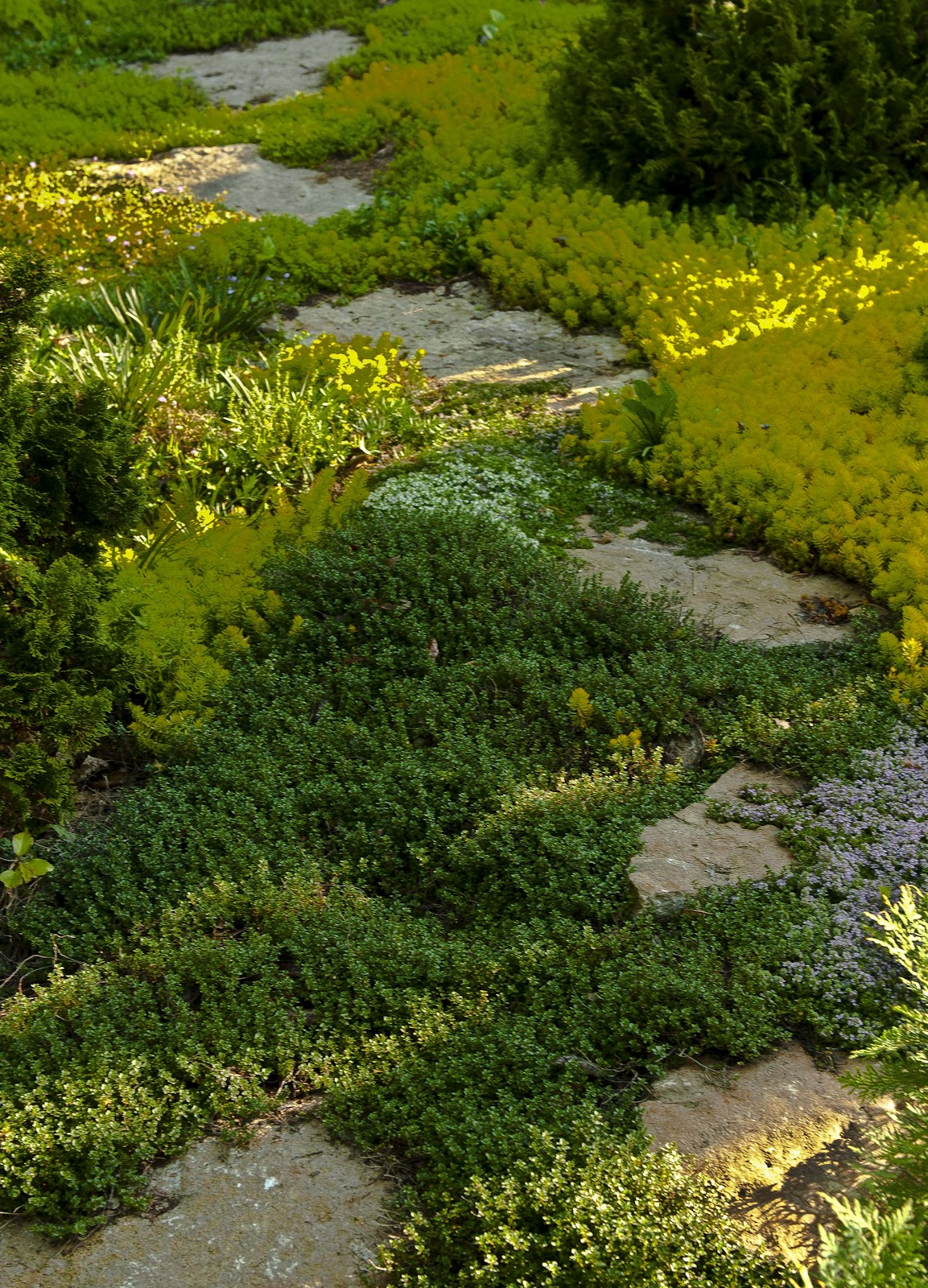 Kentucky Native Plant and Wildlife: Rock Gardens, a great ...