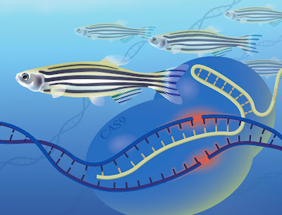 Fish Genomes of 2016 in Review
