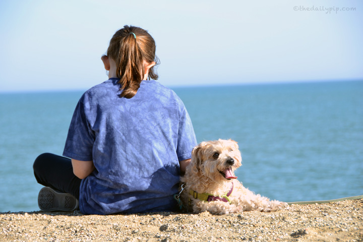 Ruby, the rescued yorkie-poo and her human sister reading by Lake Michigan