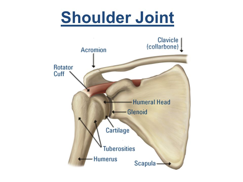 overview of the shoulder joint Glenohumeral (shoulder) arthritis is a common source of pain and disability that affects up to 20% of the older populationdamage to the cartilage surfaces of the glenohumeral joint (the shoulder's ball-and-socket structure) is the primary cause of shoulder arthritis.