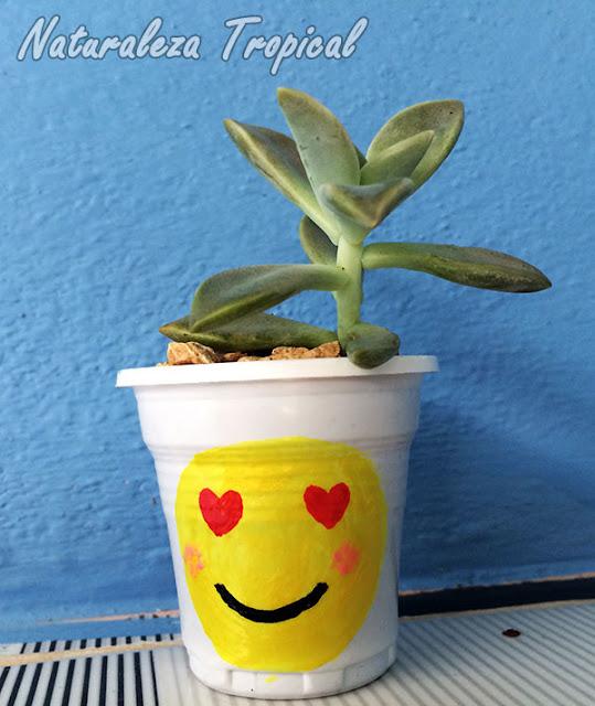 Maceta con emoji del amor y suculenta del género Graptopetalum