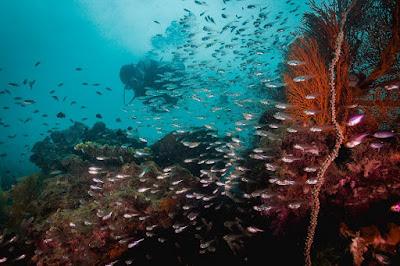 Photo on the dive spot Pattaya Corner on Ko Lipe island