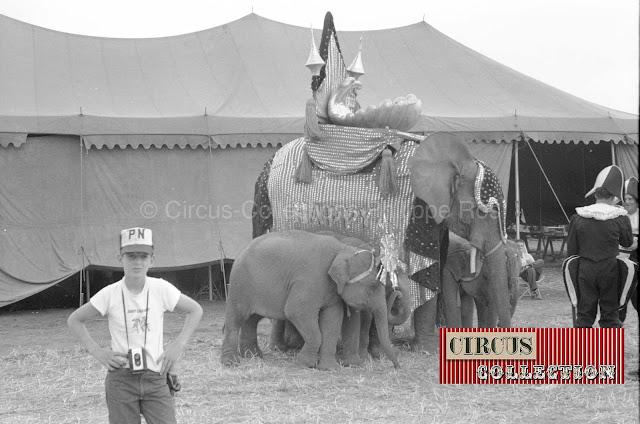 éléphant harnaché pour la parade