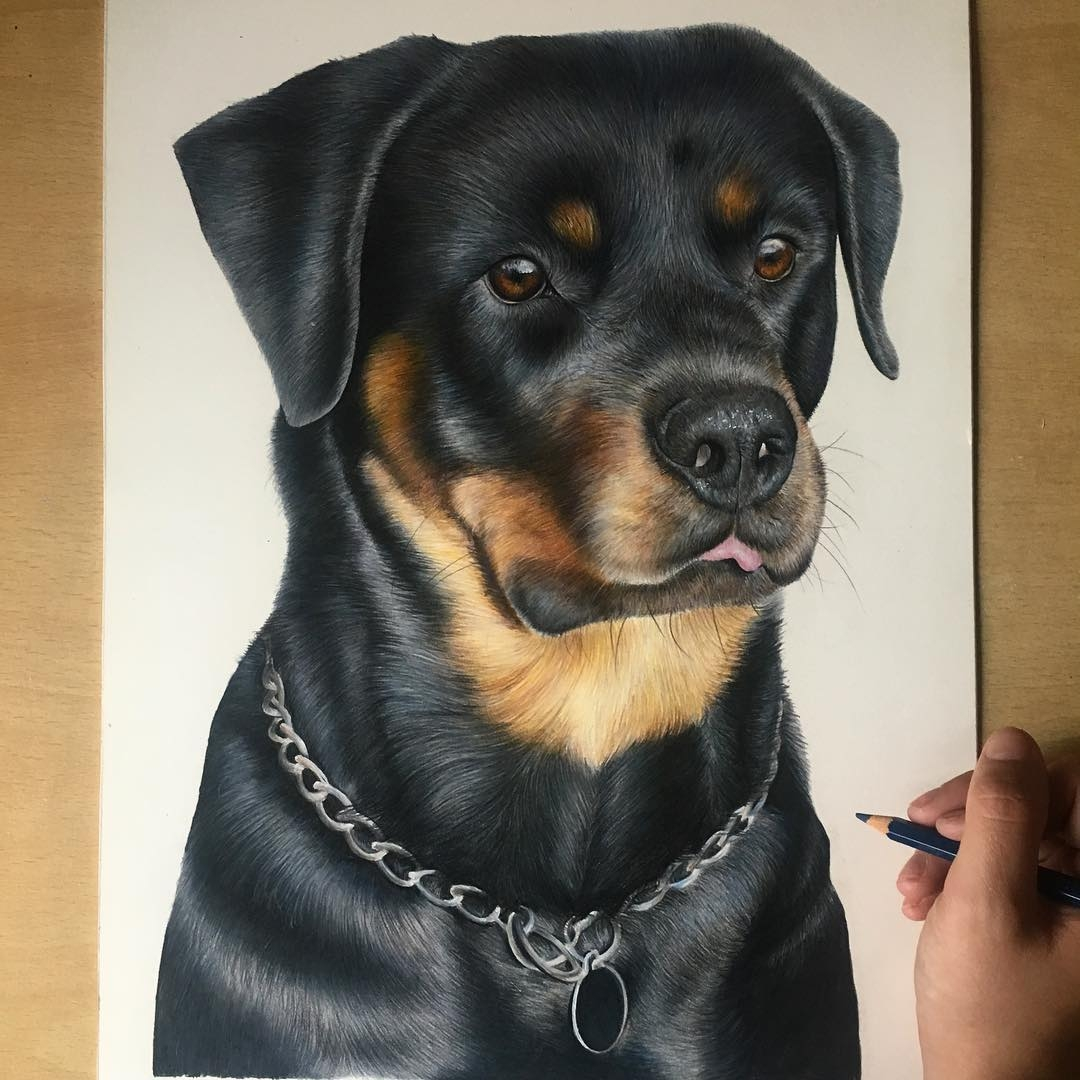 12-Rottweiler-Bethany-Vere-Colored-Pencils-Realistic-Animal-Drawings-www-designstack-co