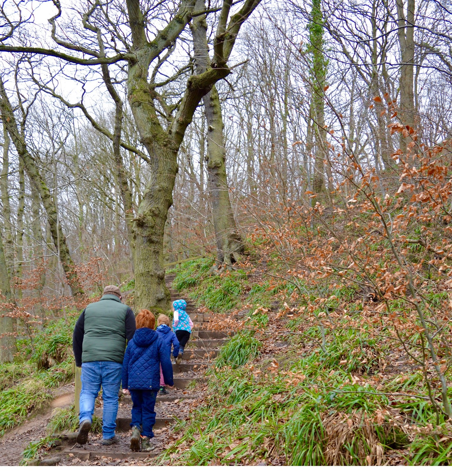 Our Visit to Plessey Woods - A FREE day out in Northumberland. It was very muddy and the perfect chance for Harry to put his GORE-TEX shoes through their paces - river steps up to meadow