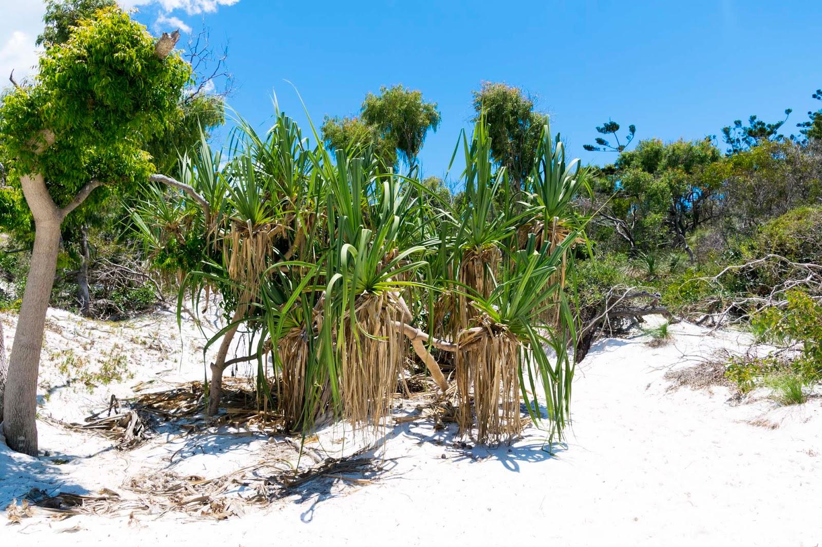 bettys beach the whitsundays