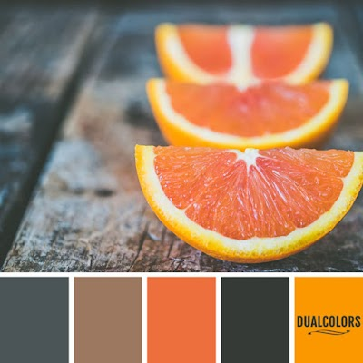 Color Paleta 13