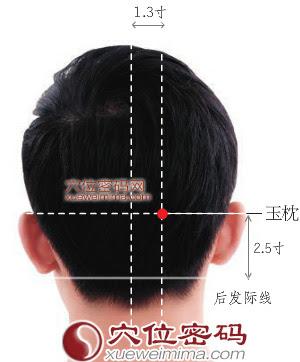 玉枕穴位 | 玉枕穴痛位置 - 穴道按摩經絡圖解 | Source:xueweitu.iiyun.com