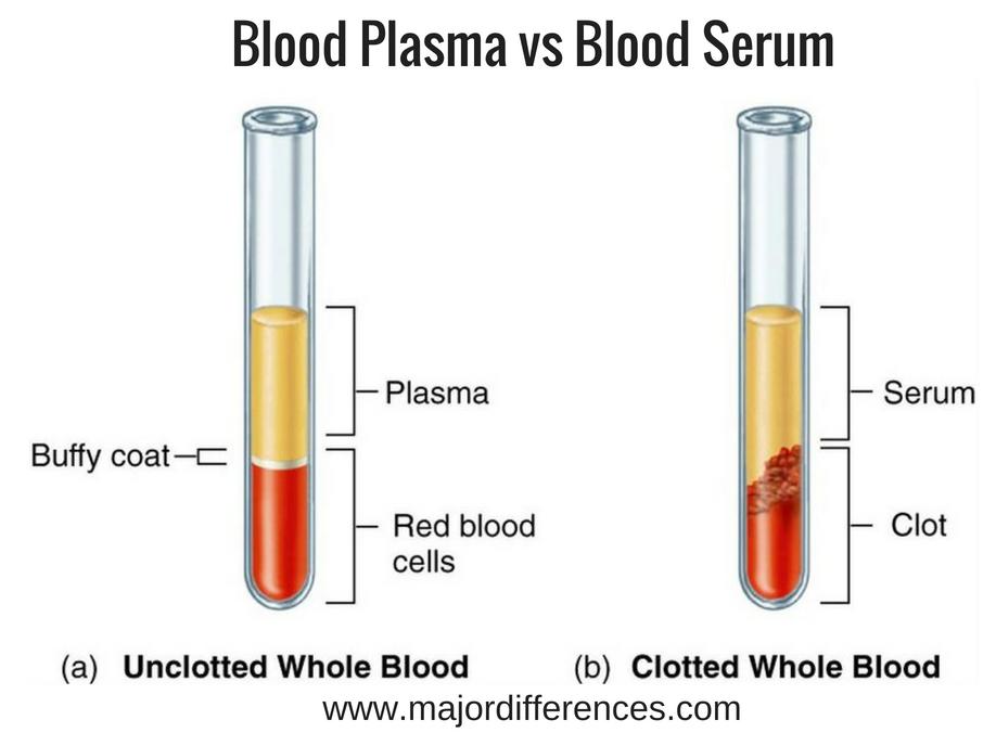 plasma vs serum - Hizir kaptanband co