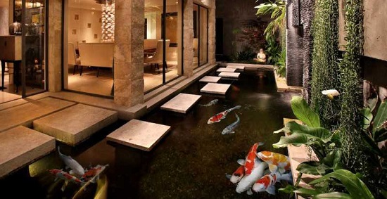 Kolam Ikan Koi Depan Rumah - Budidaya Ikan