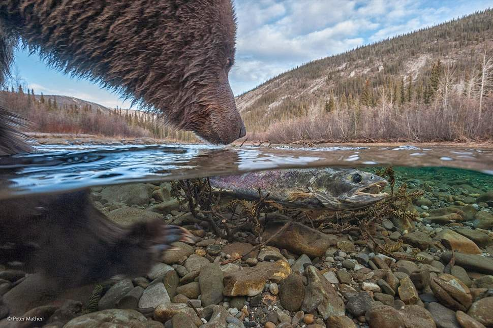 Finalists Of The 2014 Wildlife Photographer Of The Year Competition  Whats This by Peter Mather photography