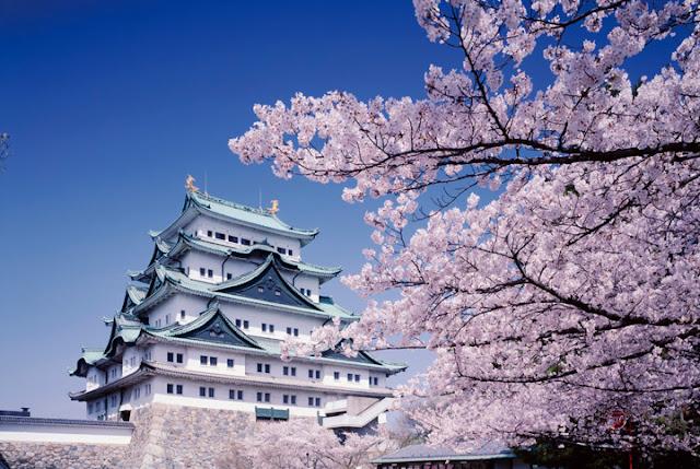 Tempat terbaik menikmati sakura di Nagoya