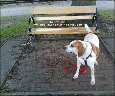 Dog Valentino at Canal Winchester Area Historical Society