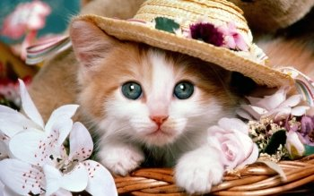 Beautiful Cat Wearing Round Cap