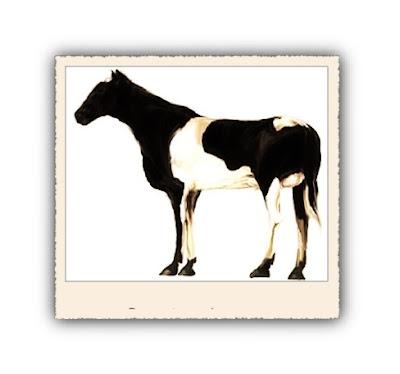 koe of paard? paardkoe  koepaard