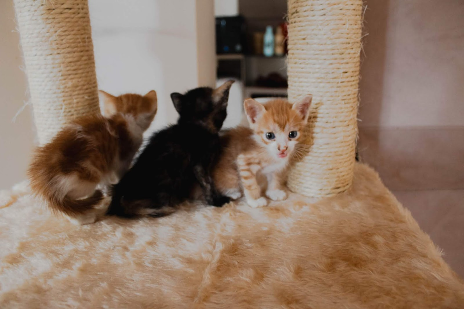 orange kitty and siblings